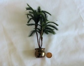 Triple trunk pygmy palms, 7 inches tall,  in hand thrown pottery planter