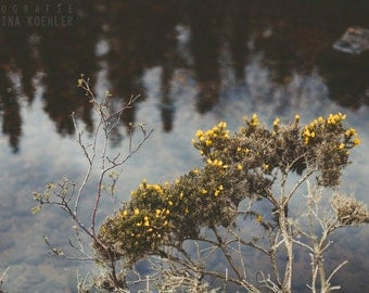 SERENITY photography print,  scottish heather and lake landscape, 8x12