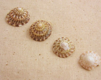 Button Seashells for Crafting or Home Decor