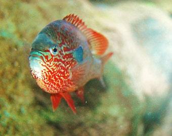 Aquarium Fish Photography