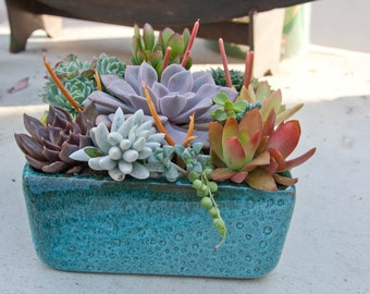 Succulent arrangement in turquoise square container/bowl-Large