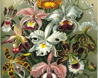 Orchid art print Botanical Art Prints Vintage Victorian art print Garden Wall Art flowers antique prints antique flower art print old prints