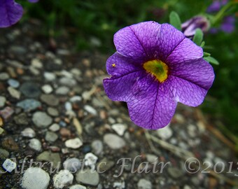 Charity of Your Choice, Rocky Path to Purple Flower