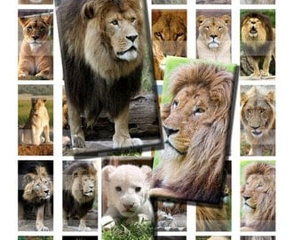 Lion Cub Big Cat Africa Wild Zoo Animal Digital Images Collage Sheet 1x2 inch Rectangles Domino Commercial INSTANT Download RD37