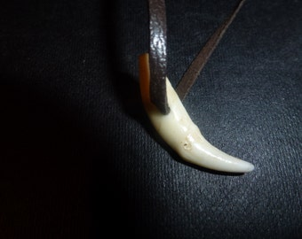 A red fox canine tooth pendant on leather necklace.