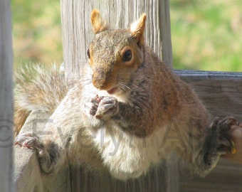 """Funny Squirrel """"Hang in There"""" Greeting Card with or without message for Encouragement, Get Well, Thinking of You"""