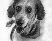 5x7in custom miniature pet portrait created by me in graphite.