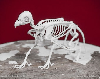Griffin Skeleton 3D Print Taxidermy Sculpture