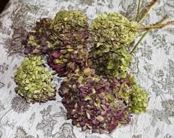 Dried hydrangeas, Hydrangeas, Purple Hydrangeas, Green Hydrangeas, -  Large bunch!!