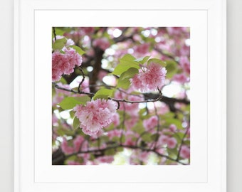 Cherry Blossoms - Fine Art Print  - Girls Bedroom Wall Art - Teen Room Decor - Dorm Decor - Flower Decor - Central Park Art - Nursery Art