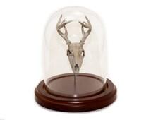 3D Printed Deer Skull Display Animal Skull Bell Jar