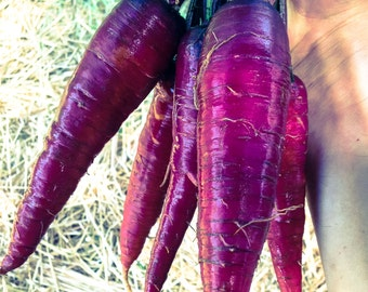 Certified Organic Cosmic Purple Carrot Seeds (~525): Non-GMO, Certified Organic Seed Packet