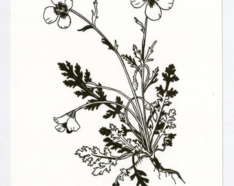 Wind Poppy letterpress print, black