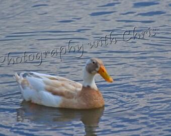 Quack !