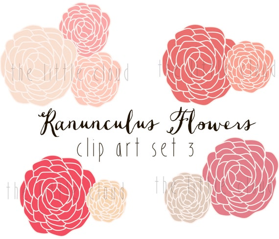 Ranunculus Flower Clip Art vector and png Modern Flower