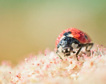 Ladybug Decor: Spring Ladybug Photography Perfect for Nursery & Nature Lovers -  Pastel Pink, Red