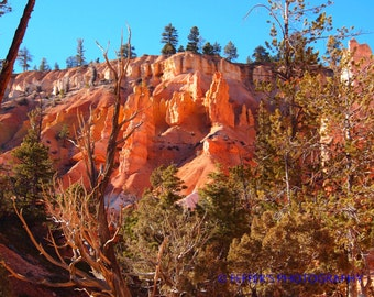 Bryce Canyon Utah Digital  Photographyh  - 5x7 or 8x10 Fine Art Print - Southwestern Home Decor