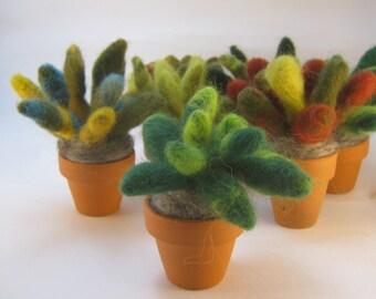 """Needle felted plants (little ) in terracotta pots. Plants are 3.5"""" tall by 3.5"""" wide. Pots are 1.5"""" tall by 1.5"""" wide."""