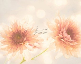Dreamy Orange Chrysanthemums