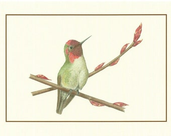 Set of 4 Anna's Hummingbird Cards