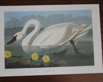 Common American Swan John James Audubon Art Plate CCCCXI to Frame or for Collage, Scrapbooking, Paper Arts, Assemblage and MORE