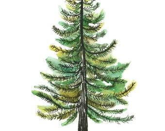 Watercolor Evergreen Tree Art Print - painting, tree, nature, watercolor painting, art print