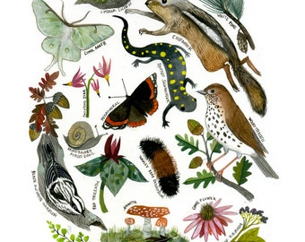 Flora and Fauna of the Midwest:11 x 14 Giclee Print