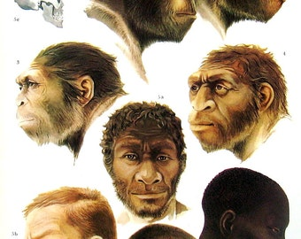 Evolution of Man - 1973 Vintage Encyclopedia Print Book Page