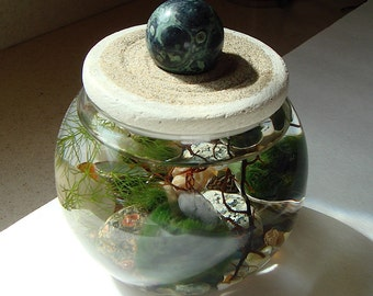 SALE! Zen Garden Stone Top Marimo Ball Unique Terrarium with Choice of Gemstone Sphere