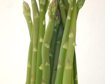 Textured Painting Sculpted Paper Green Asparagus 3D Original Botanical Kitchen Wall Art Fine Art Painting