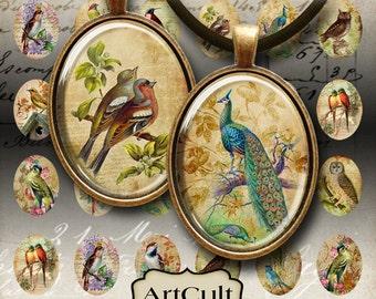 Printable Download ANTIQUE BIRD OVALS 22x30 mm vintage Images Digital Collage Sheet for cabochons pendants magnets bezel trays by Art Cult