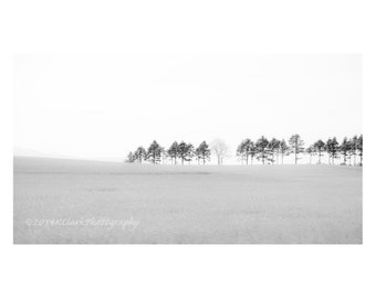 Treeline Fine Art Photography Black and White Minimal Home Large Wall Clean Simple Decor Misty Magical Scottish trees Minimalist Photography