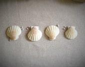 Natural seashell boutonnieres, set of 4