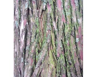 tree photography, green and brown nature wall art, neutral decor, moss and bark photograph