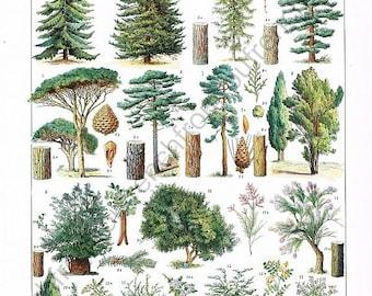 vintage french botanical illustration trees forest digital download