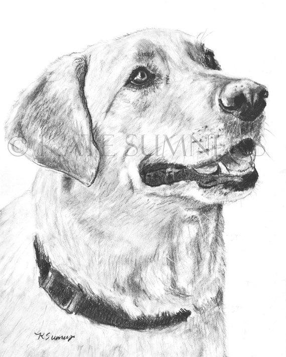 Labrador Retriever impresión del arte del dibujo 8 x 10 por ESArt