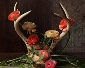 Still Life with Ranunculus and Antler in  the Dutch Style