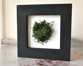 Framed Moss Mini Wall Art Home Decor