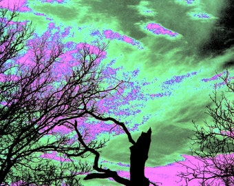 Surreal Sky with Trees Green and Purple  8 x 10 Fine Art Photography