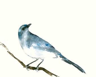 Bird Watercolor Giclee Print from  Original Artwork Blue Jay