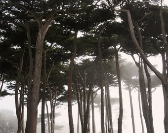 IN STOCK Coastal Fog, San Francisco, Forest Through the Fog, Dreamy California Coastal Landscape 10x15 Fine Art Photograph