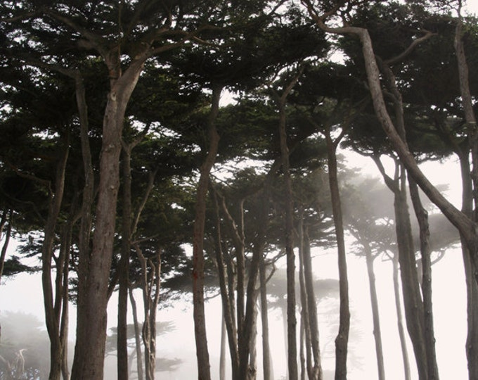 Coastal Fog, San Francisco Home Decor, Forest Through the Fog, Dreamy California Coastal Landscape, San Francisco Fine Art Photograph
