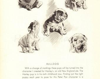 Dog Print,  BULLDOG Print, Puppy Print, Art Print, Home Decor, Book Plate, Black & White Illustration, Wall Decor, Cats, A-10