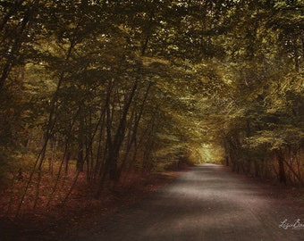 "Forest - Surreal Forest Photo - Forest Path - ""Light Painted Forest"", Large Print - Nature Photography"