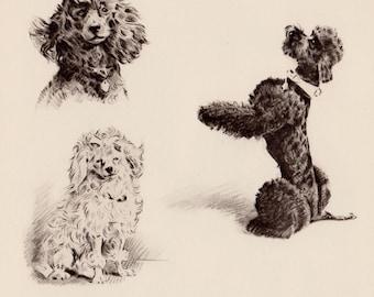 SWEET POODLE Print Poodle Art Study Print Poodle Gallery Wall Art Vintage 1940s Morgan Dennis Art Print 1002