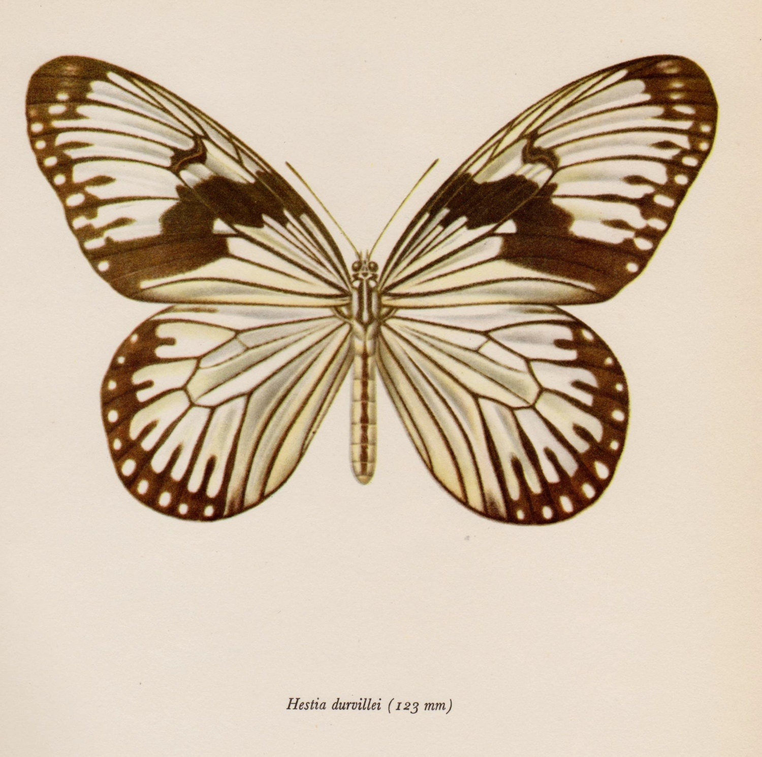 Vintage BUTTERFLY Wall Art Decor Antique Butterfly Print