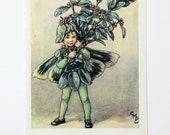 Box Tree Fairy, Flower Fairies Picture, Cicely Mary Barker Print, Nursery Art, Fairy picture