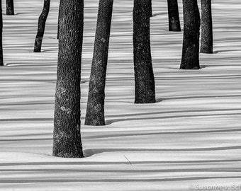 Black & White Photography, Tree Trunks in Snow, Winter Trees, Fine Art Print, Abstract, Minimalistic, Shadows, Meditation, Zen, Home Decor