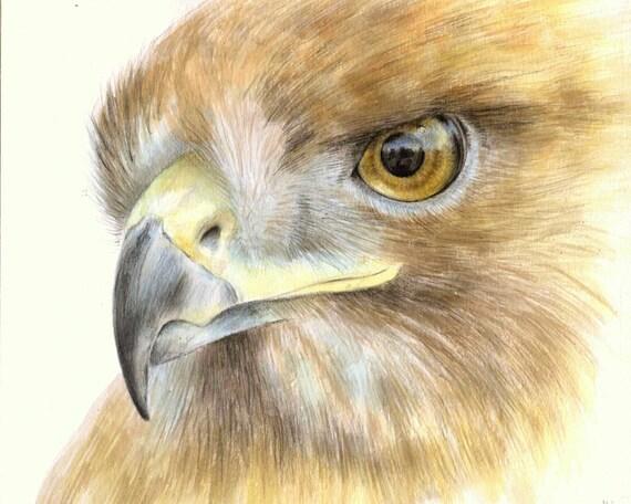 Hawk painting watercolor - photo#45