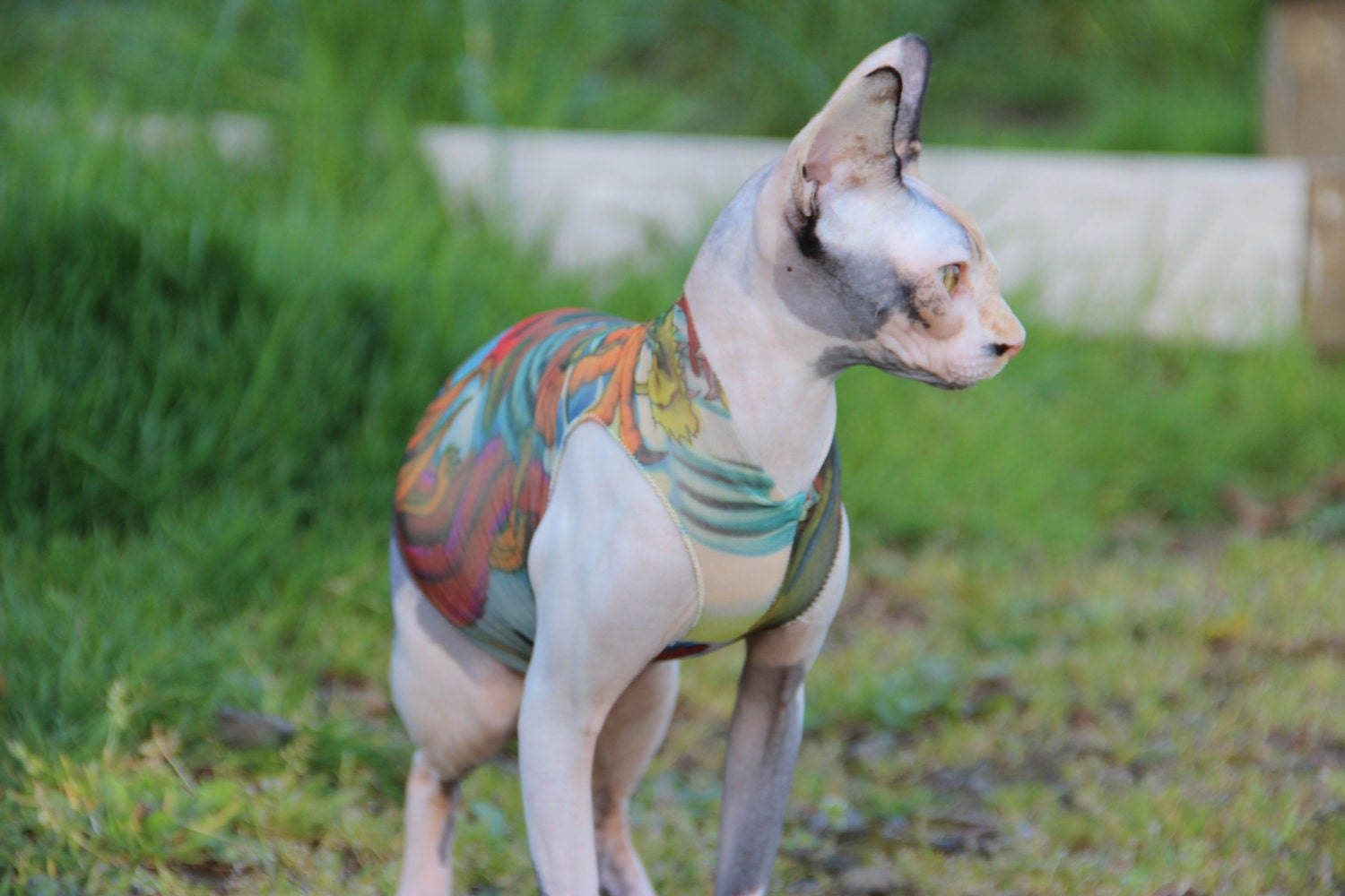 sphynx cat clothes japanese dragon tattcat� chinese
